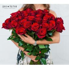 51 роза Эксплорер 70см