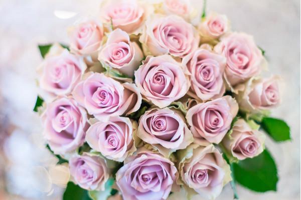 21 лавандовая роза Morning Dew