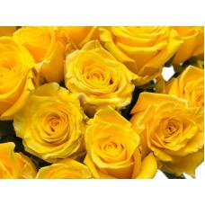 25 желтых роз 40см